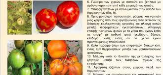 ΔΑΟΚ ΠΔΕ: Ενημέρωση για τον ιό της καστανής ρυτίδωσης των καρπών της τομάτας