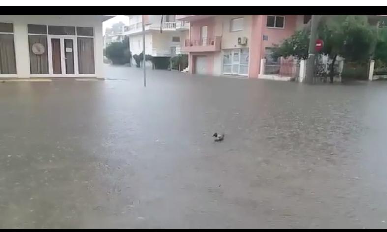 """Πύργος: Πλημμύρισαν περιοχές της πόλης- Διακομωδώντας την κατάσταση κάτοικος στο Λάπατο """"έβγαλε"""" βόλτα μια πλαστική πάπια! (Photos)"""