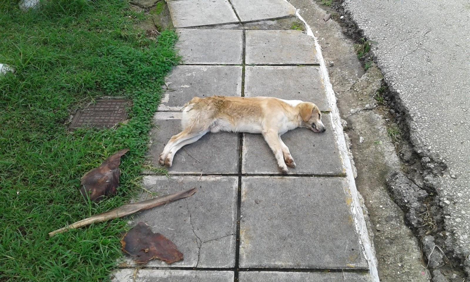 Κάστρο Κυλλήνης: Φρίκη χωρίς τέλος καθώς δολοφόνησαν με φόλα και άλλο σκυλί (Photo)