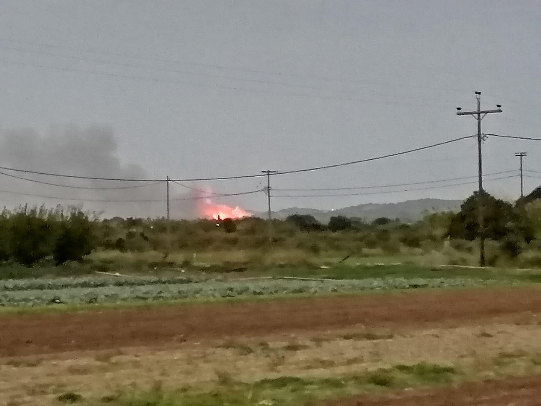 Ηλεία: Πυρκαγιά σε δασική έκταση στην Τριανταφυλλιά