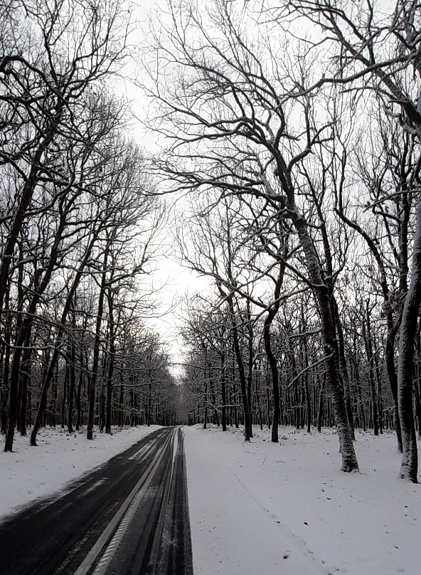 Ηλεία: Τα πρώτα χιόνια έπεσαν στα ορεινα του Νομού-Πανέμορφο και χιονισμένο το δρυοδάσος της Φολόης (photo)