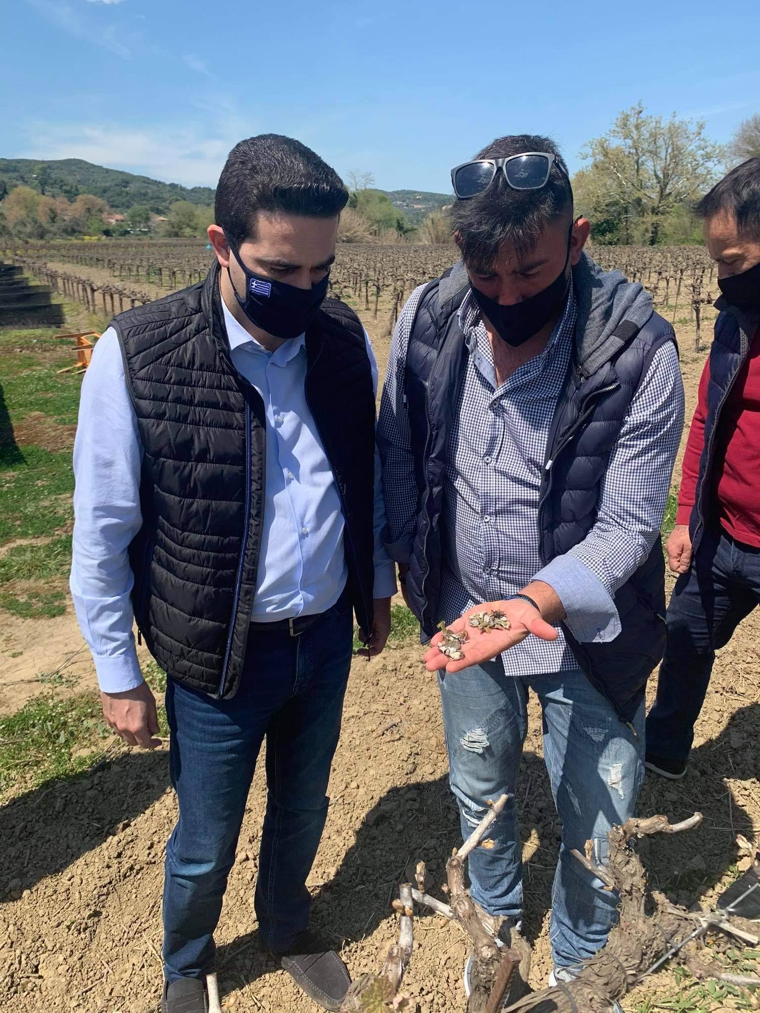 Μιχάλης Κατρίνης: Σε αδιέξοδο οι αγρότες της Ηλείας- Άμεσες διαδικασίες για να δοθούν αποζημιώσεις από τον παγετό